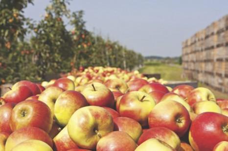 Les fruits et légumes pourraient être la clé de la longévité