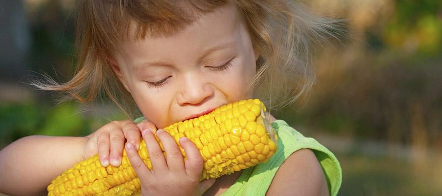 petite fille qui mord dans un épi de maïs