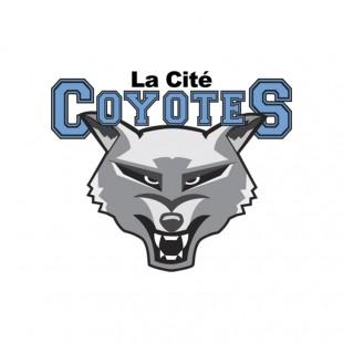 Basketball masculin : Les Coyotes en route pour les provinciaux