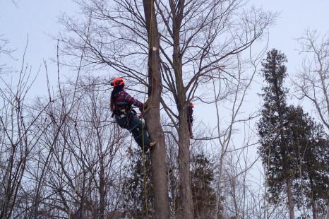 Environnement forestier : Des étudiants s'impliquent auprès de la communauté
