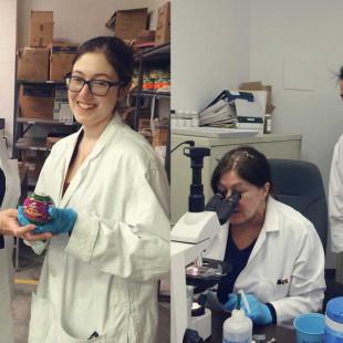Recherche appliquée: des vers microscopiques cultivés à La Cité